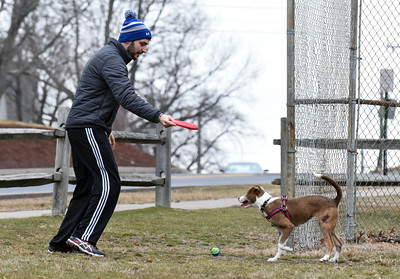 010216  Wesley Bunnell | Staff  Owner Paul Williard plays a game of catch with his six month old shepard/lab mix Lady on Federal Hill Green on Monday afternoon.