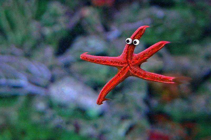 """Starfish Executing a Grand Jeté."""