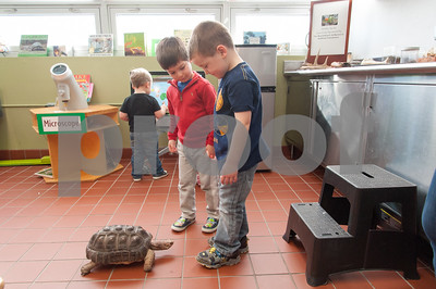 01/25/18  Wesley Bunnell | Staff  Children were able to get an up close look at animals at Imagine Nation in Bristol on Thursday afternoon.  Manny Moreiras, age 4, and Joey Beauchemin, age 5, look down as they are followed around the room by Ruby the red footed tortoise.
