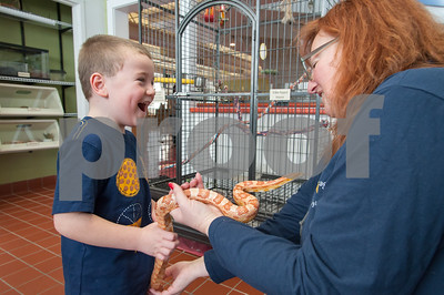 01/25/18  Wesley Bunnell | Staff  Children were able to get an up close look at animals at Imagine Nation in Bristol on Thursday afternoon.  Joey Beauchemin, age 5, laughs as Corny the corn snake starts to climb on him as he is being held by worker Karen Pac.