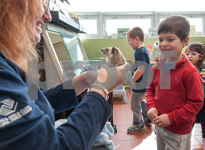 01/25/18  Wesley Bunnell | Staff  Children were able to get an up close look at animals at Imagine Nation in Bristol on Thursday afternoon.  During the 1:30pm show run by Karen Pac 4 year old Manny Moreiras smiles while looking at Pinwheel the hedgehog.