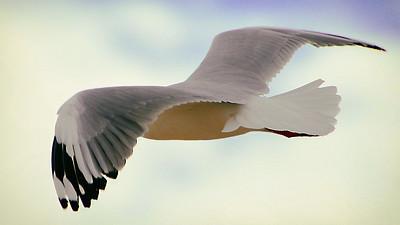 """""""Gull Wings."""""""