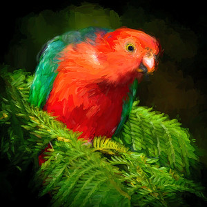 """Male King Parrot, Eudlo, Queensland. Impressionist painting."""