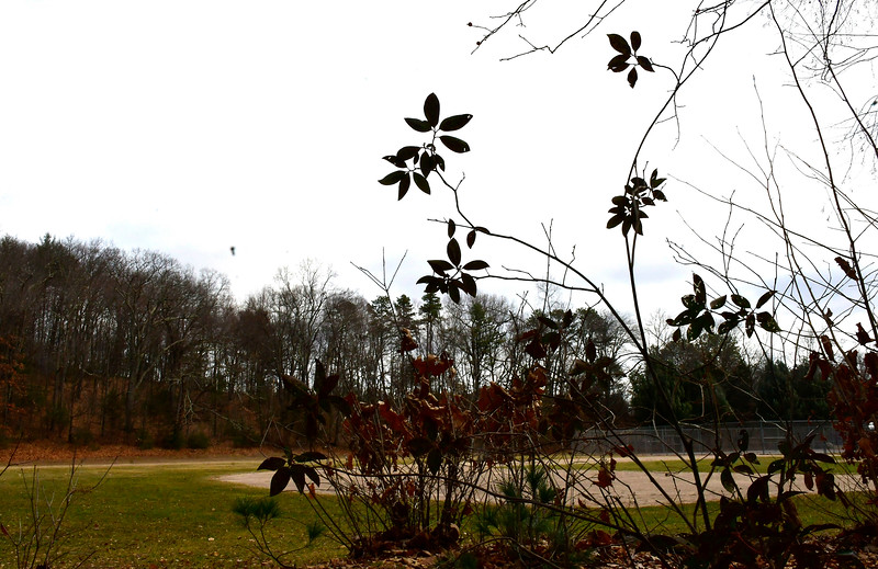 1/10/2019 Mike Orazzi | Staff The Bristol City Council is going to seek a state grant to buy land for open space near the Barnes Nature Center.