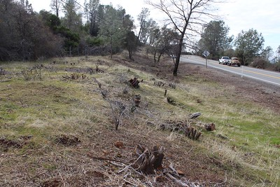 This fire safety vegetation treatment along Highway 32 east of Chico could be covered under a process underway by the state to increase the amount and speed of such work that's being done. Here, the thick brush visible at left has been cut away along the road, with the intent of keeping the road open as an escape route in case of a fire. (Steve Schoonover -- Enterprise-Record)