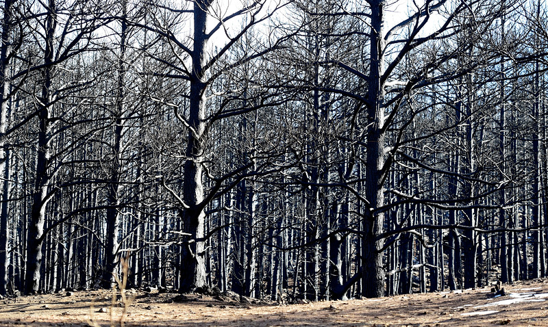 Land Damaged in the Calwood Fire