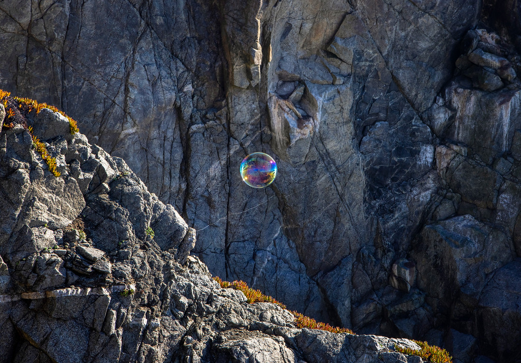 bodega bubble