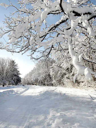 THB photo/John P. Cleary<br /> The snow clung to every branch along the tree line of Mounds State Park.