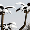 THB photo/John P. Cleary<br /> Palm trees, or coconuts, for anyone? Not these snow covered ones at Tim Allred's Collision Center on west 29th Street in Anderson.