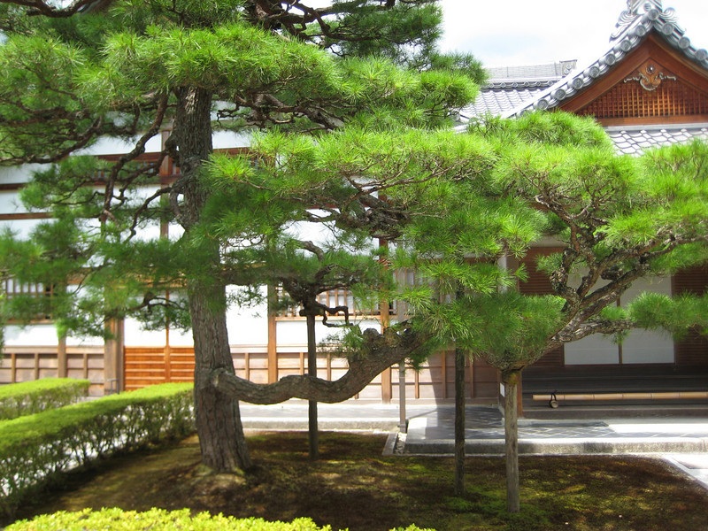 The Hôjô is the main temple building (Hondô) of Ginkaku-ji and dates to the mid-Edo period