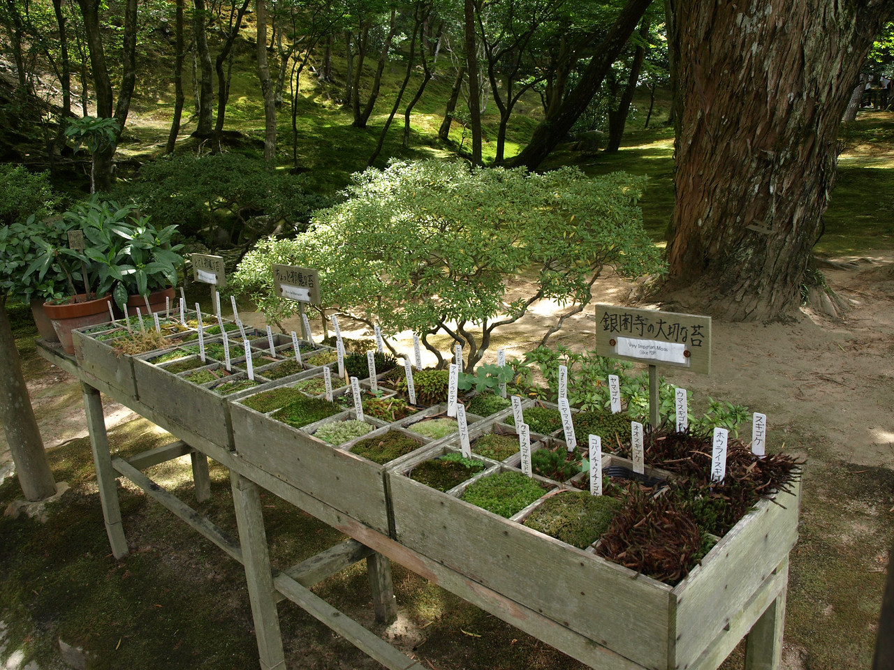 A little herb garden, with plants likely used for landscaping in the rock gardens.