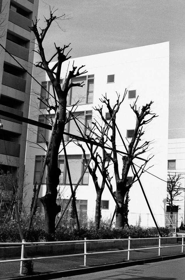 Tokyo, Ikebukuro <br /> March 2009 <br /> <br /> Tri-X 800, FM2