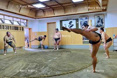 Sumo Training at a Stable