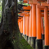 Fushimi Inari Shrine. 5