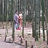 Pre-wedding photos in Bamboo Forest