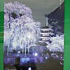 This is a poster on the To-ji campus that shows the tree at night during cherry blossom season.