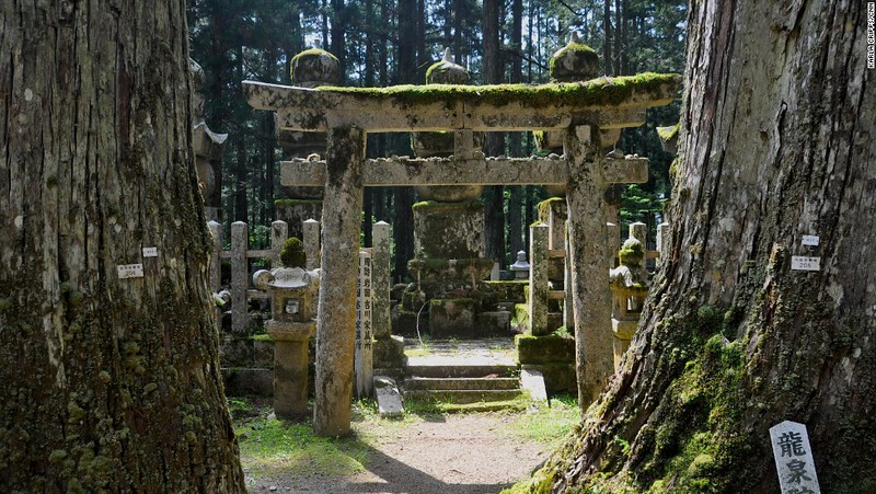 Web photo: the cemetery is huge, this photo gives the atmosphere. Trees just as majestic as the monuments.