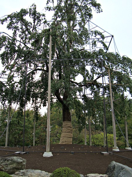 This is the sacred tree at To-ji and you can see that they take great care with it. It is super old. Apparently, most temple complexes have a sacred tree.