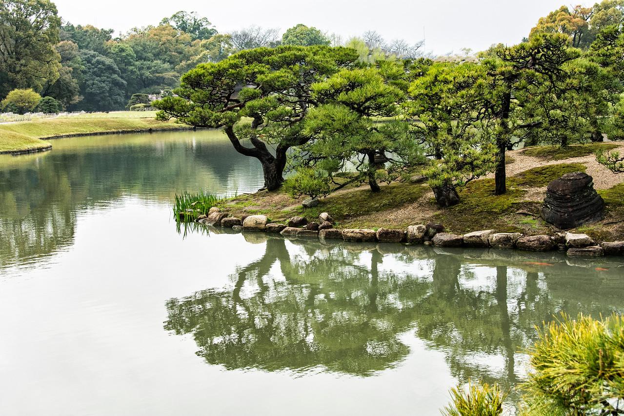 Pine Tree Reflection-JAP_8348
