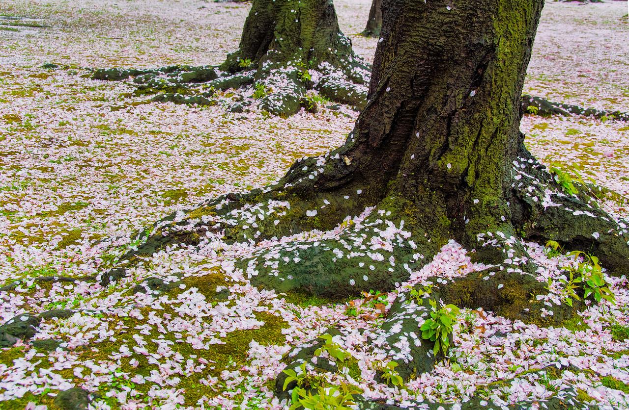 Blossoms-JAP_8343