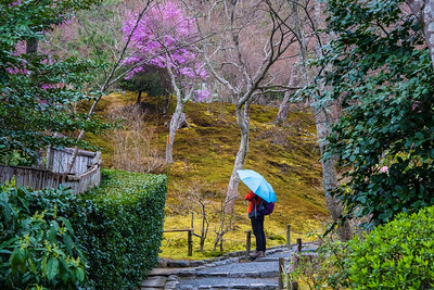 Tenryu-ji Garden-woman w blue umbrella_JAP_6531