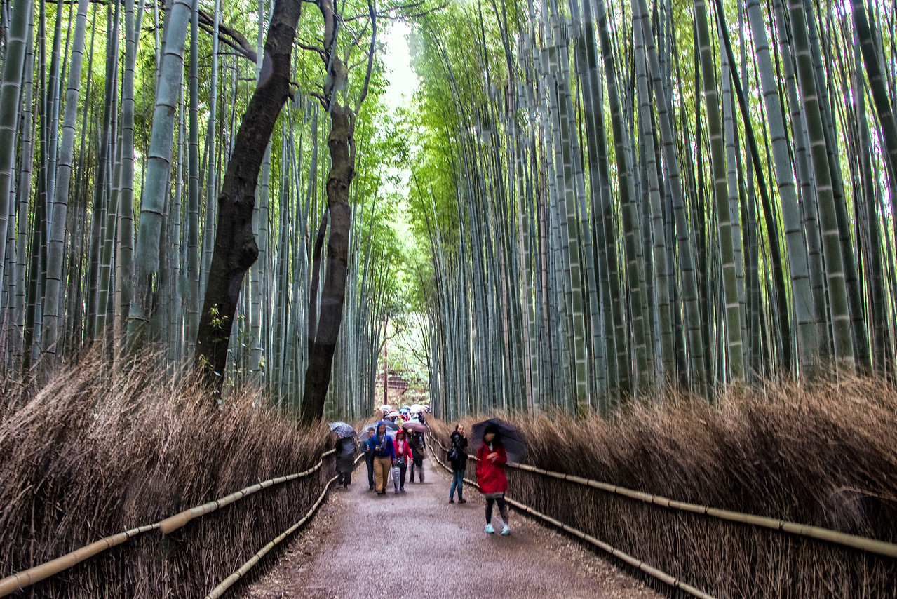 Bamboo Forest-JAP_6582