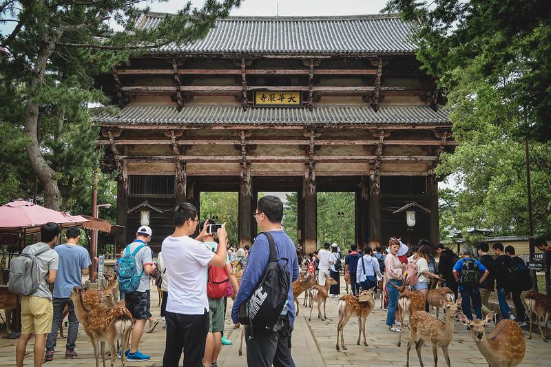 Deer roaming in Nara Park.