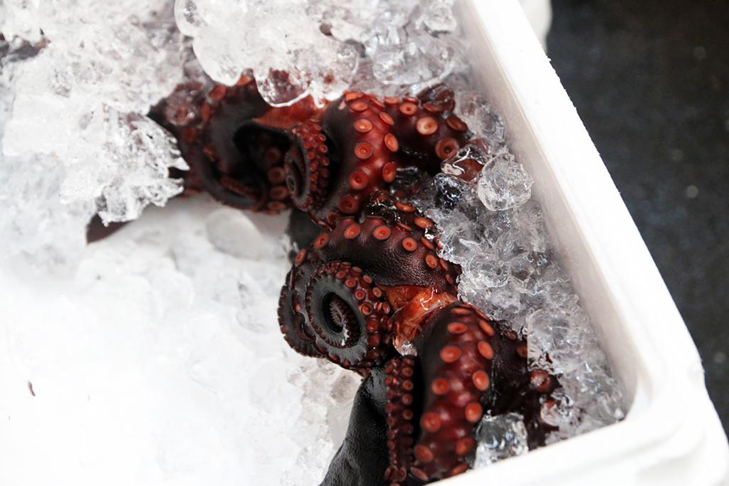 octopus in Japan