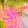 A Whirlwind of Azaleas