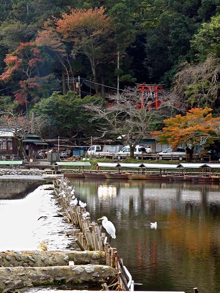 Arashiyama162XL