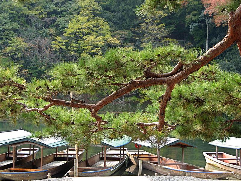 Arashiyama165XL