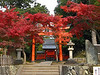 This colourful entrance to a Shinto shrine was along our route to Tenryu-ji