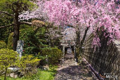 Suwa Shrine (諏訪神社)