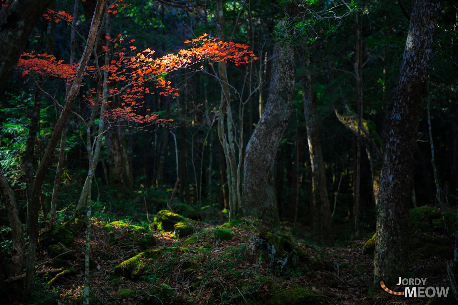 Aokigahara Jukai