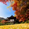 The Paradise of Okochi-san