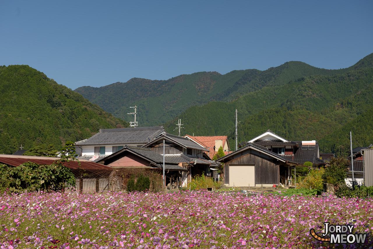 Kiyozumi Cosmos Field