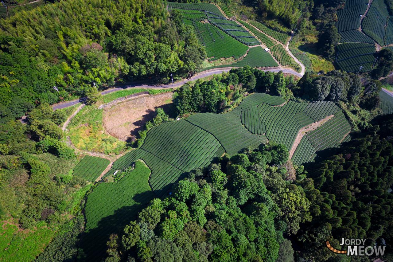 Wazuka Tea Fields