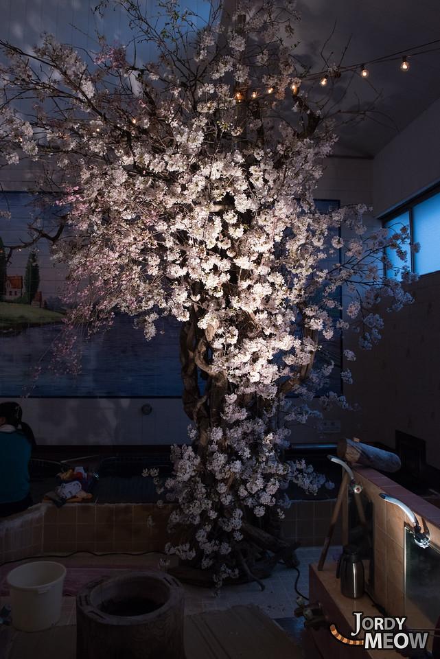 Sento Sakura Event