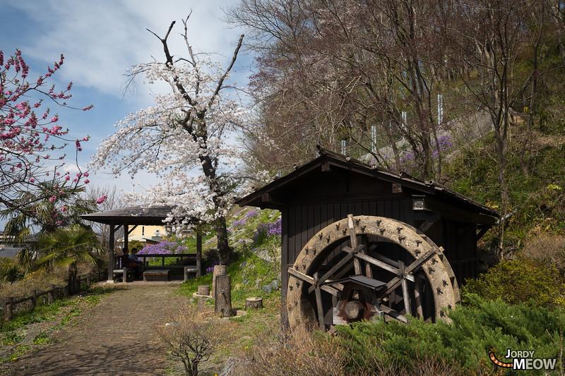 Sakura at Chichibu