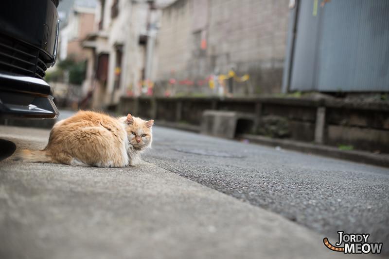 Cat in Yoyogi