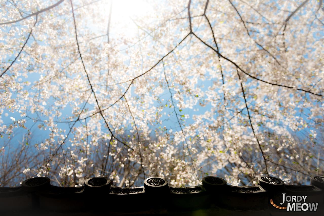 Sakura Roof Yasukuni