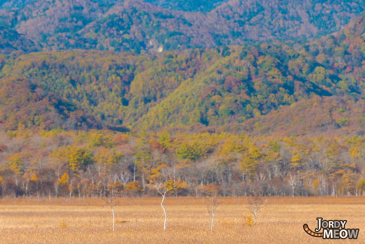 Le Marais de Nikko