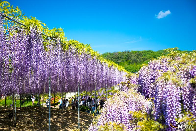 Ashikaga Flower Park