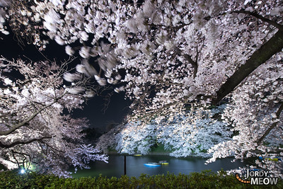 Sakura Flakes