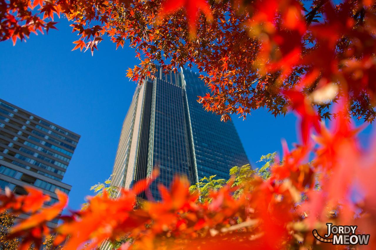 Tokyo Mid-Autumn