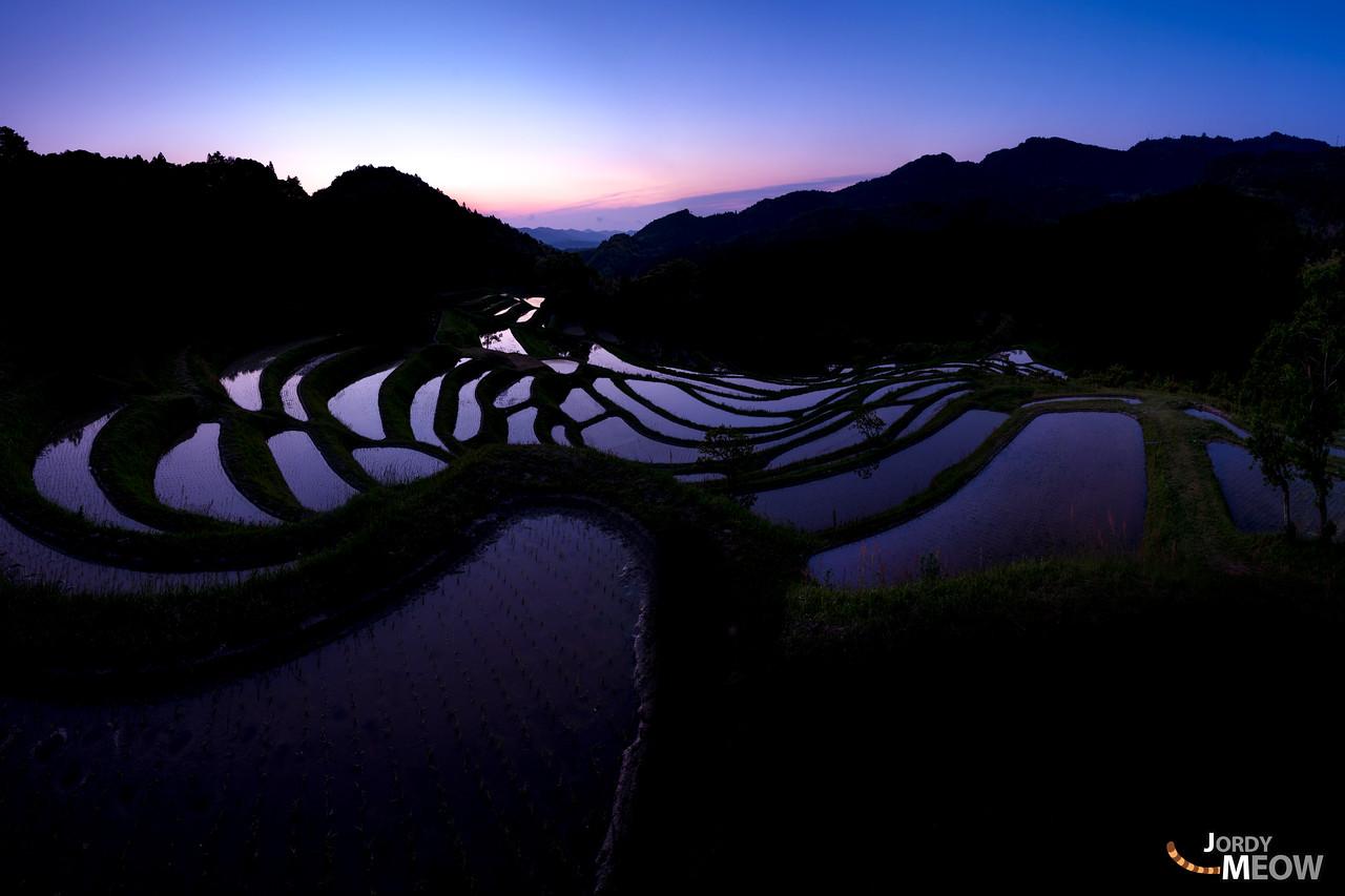 Purple Rice Terraces