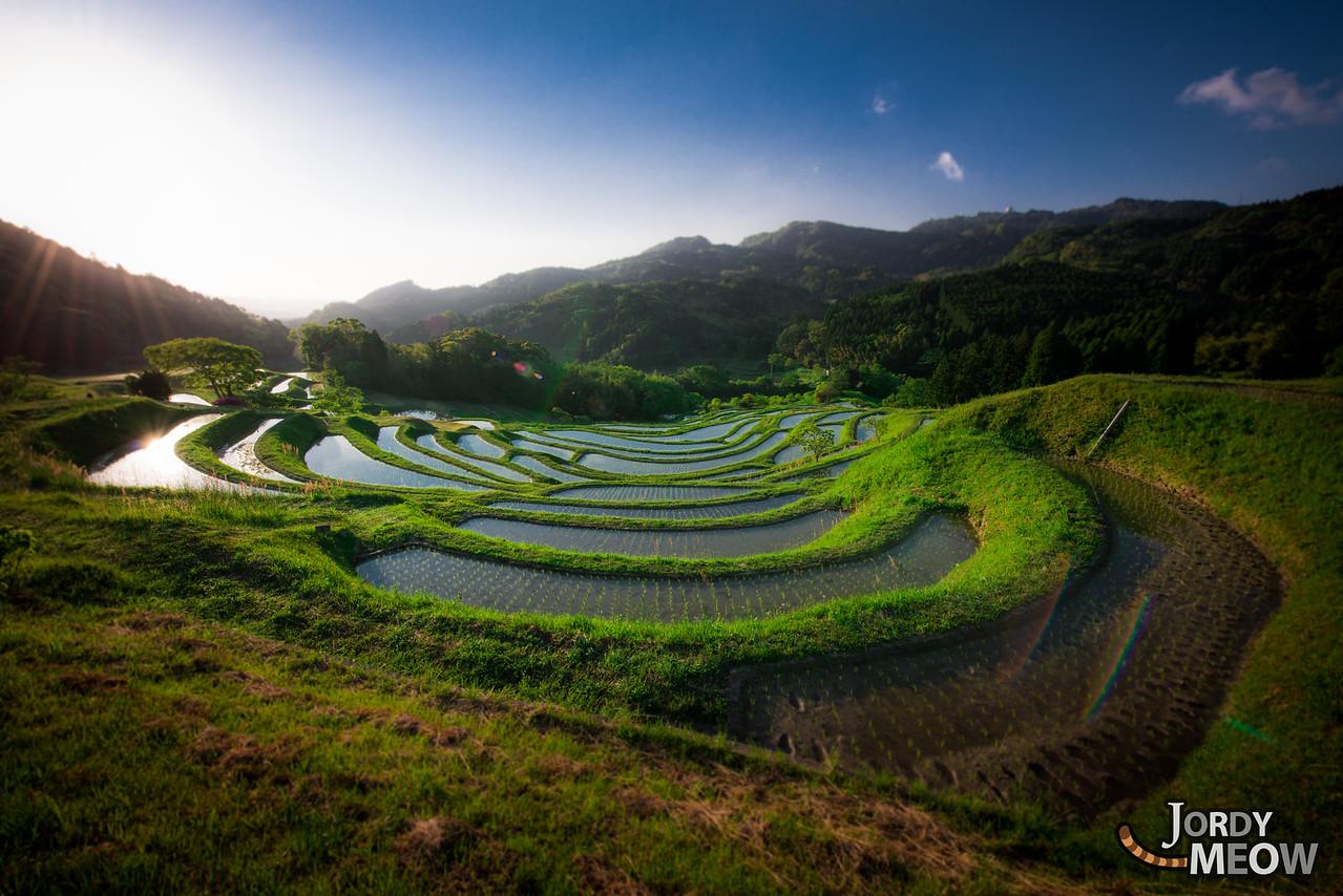 Chiba Rice Terraces