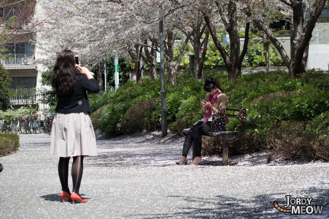 Roppongi Sakura