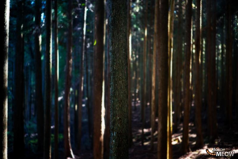 The Giant Tree of Oppara