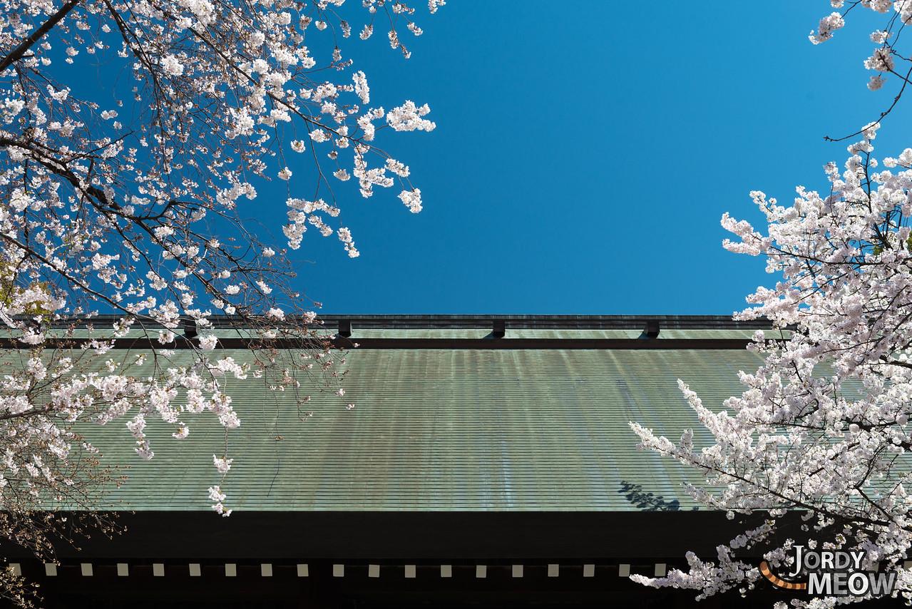 Yasukuni Shines